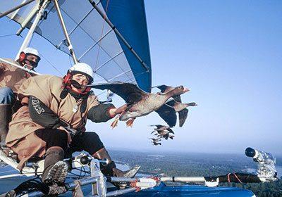 vol avec les oiseaux camping auvergne