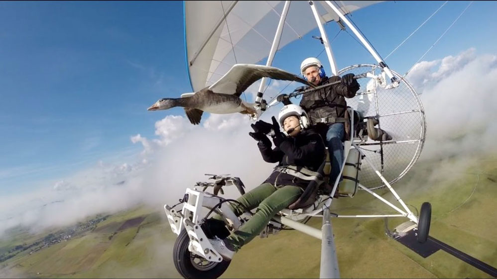 flight with the birds cantal camping
